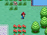 Pokemon: Forest Quest