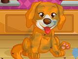 Игра Салон Красоты для Собак