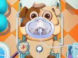 Игра Уход и Лечение Животных