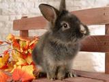 Игра Пазлы Кролик