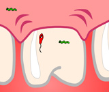 Игра Зубник