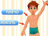 Игра Развивающая: Тело Человека